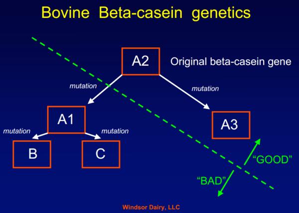 A1-en-A2-beta-caseïne-melk