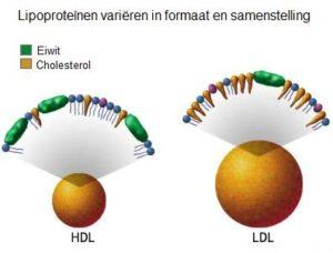 hdl-ldl-cholesterol lipoproteinen